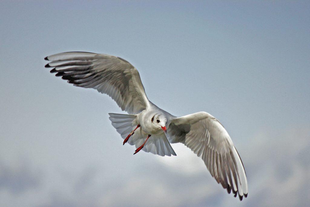 vogel Natuurgeneeskundige praktijk Amsterdam